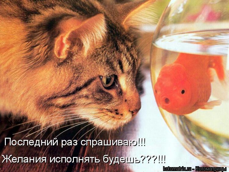 Котоматрица: Последний раз спрашиваю!!! Желания исполнять будешь???!!!