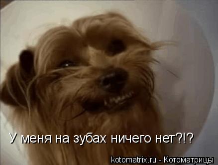 Котоматрица: У меня на зубах ничего нет?!?