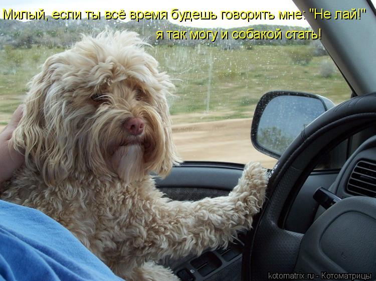 """Котоматрица: я так могу и собакой стать! Милый, если ты всё время будешь говорить мне: """"Не лай!"""""""