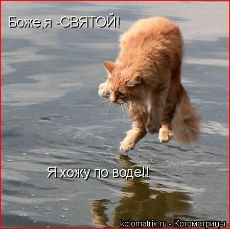 Котоматрица: Боже,я -СВЯТОЙ! Я хожу по воде!!