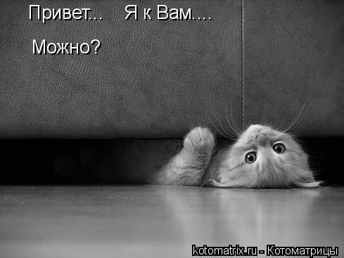 Котоматрица: Привет...    Я к Вам.... Можно?