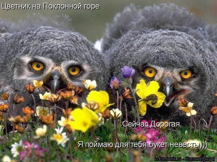 Котоматрица: Цветник на Поклонной горе Сейчас,Дорогая, Я поймаю для тебя-букет невесты)))