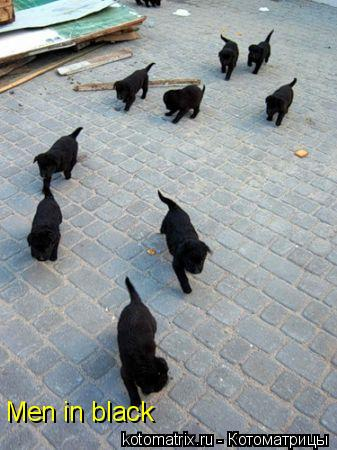 Котоматрица: Men in black