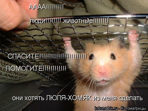 Котоматрица: АААА!!!!!!!!! люди!!!!!!!! животные!!!!!!!! они хотять ЛЮЛЯ-ХОМЯК из меня сделать СПАСИТЕ!!!!!!!!!!!!!!!!!!!!!!!! ПОМОГИТЕ!!!!!!!!!!!!