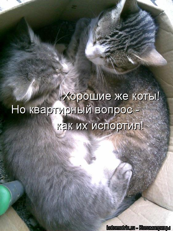Котоматрица: Хорошие же коты! Но квартирный вопрос -  как их испортил!