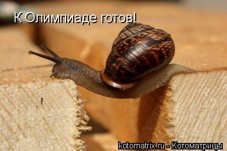 Котоматрица: К Олимпиаде готов!