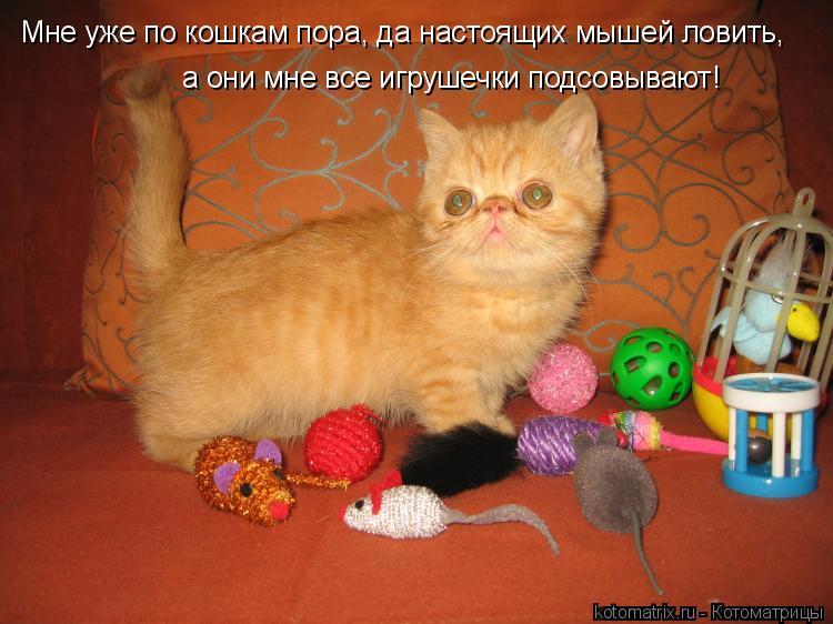 Котоматрица: а они мне все игрушечки подсовывают! Мне уже по кошкам пора, да настоящих мышей ловить,