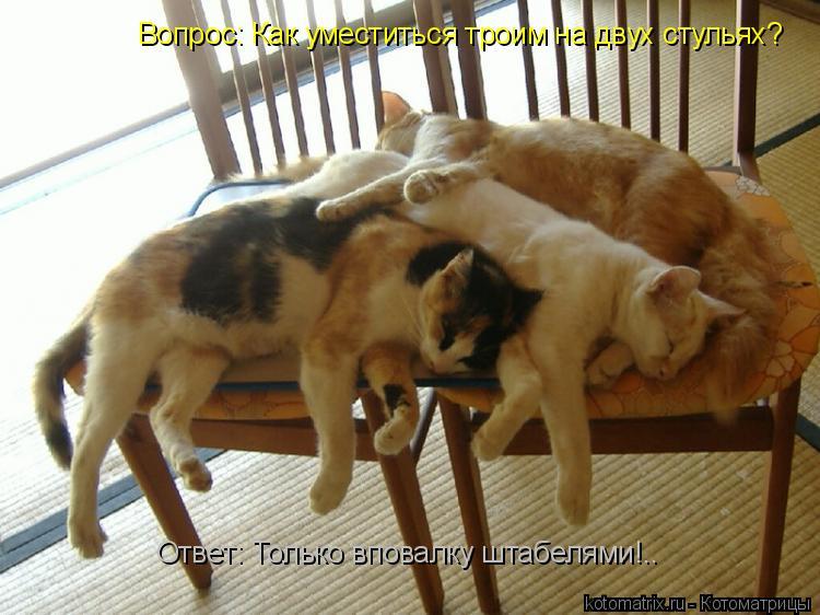 Котоматрица: Вопрос: Как уместиться троим на двух стульях? Ответ: Только вповалку штабелями!..