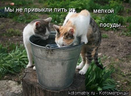 Котоматрица: Мы не привыкли пить из  мелкой посуды...