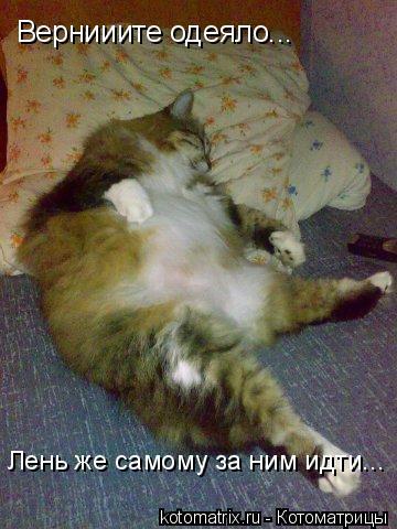 Котоматрица: Вернииите одеяло... Лень же самому за ним идти...