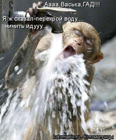 Котоматрица: Аааа,Васька,ГАД!!! Я ж сказал-перекрой воду.... чинить идууу....