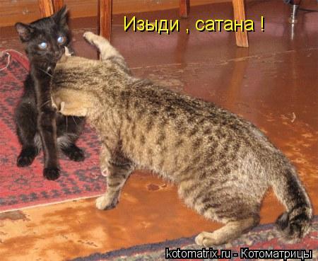 Котоматрица: Изыди , сатана !