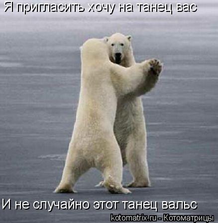 Котоматрица: Я пригласить хочу на танец вас И не случайно этот танец вальс