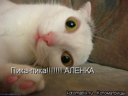 Котоматрица: Пика-пика!!!!!!! АЛЕНКА