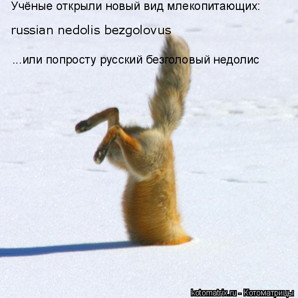 Котоматрица: russian nedolis bezgolovus  ...или попросту русский безголовый недолис Учёные открыли новый вид млекопитающих: