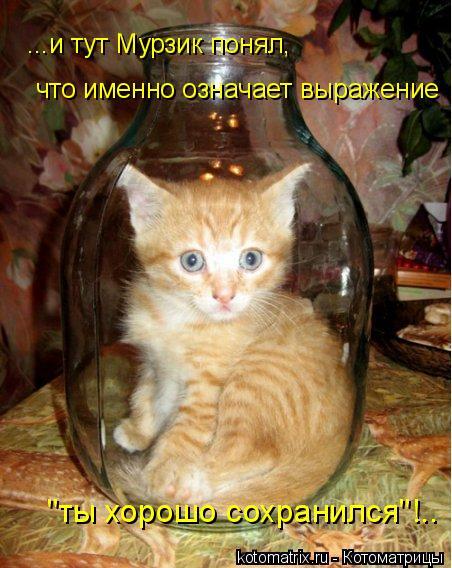 """Котоматрица: ...и тут Мурзик понял, что именно означает выражение """"ты хорошо сохранился""""!.."""