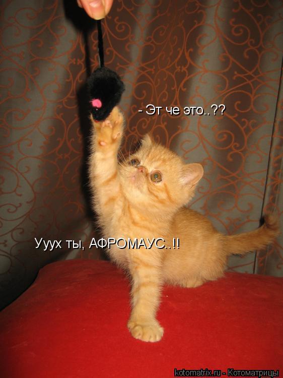 Котоматрица: - Эт че это..??  Ууух ты, АФРОМАУС..!!