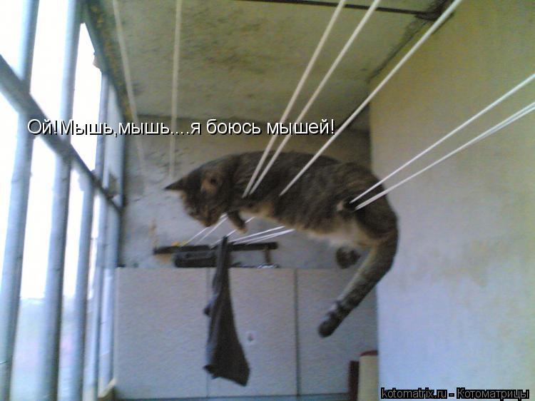 Котоматрица: Ой!Мышь,мышь....я боюсь мышей!