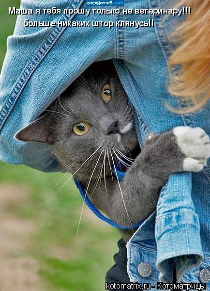 Котоматрица: Маша я тебя прошу только не ветеринару!!! больше никаких штор клянусь!!