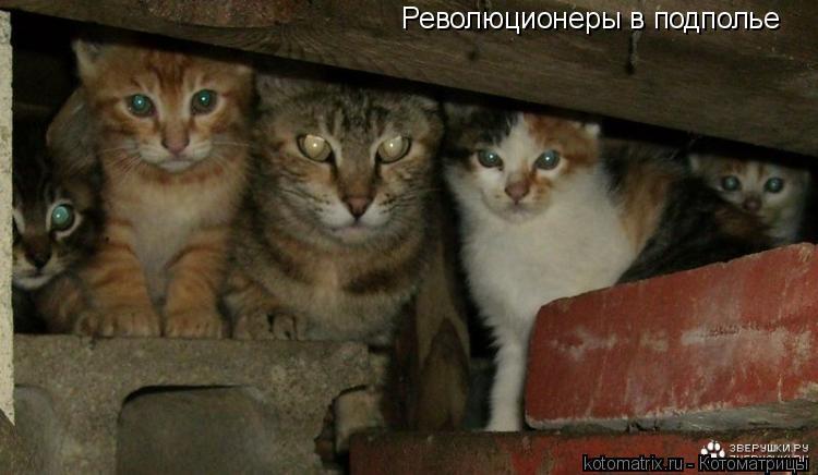 Котоматрица: Революционеры в подполье
