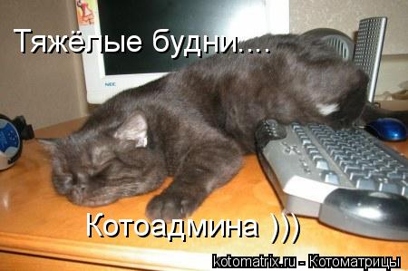 Котоматрица: Котоадмина ))) Тяжёлые будни....