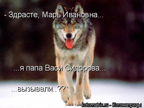 Котоматрица: - Здрасте, Марь Ивановна... ...вызывали..?? ...я папа Васи Сидорова...
