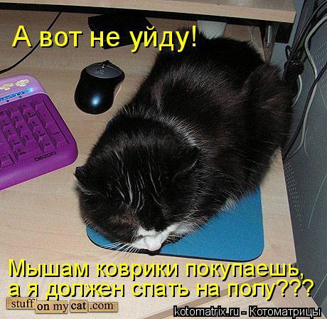 Котоматрица: А вот не уйду! Мышам коврики покупаешь,  а я должен спать на полу???