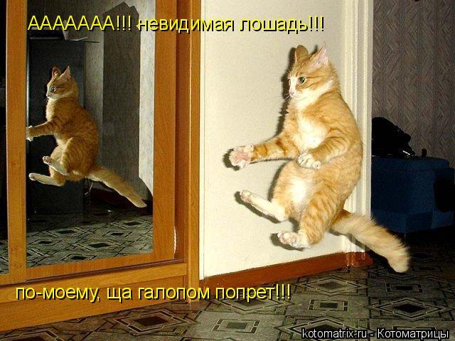 Котоматрица: ААААААА!!! невидимая лошадь!!! по-моему, ща галопом попрет!!!