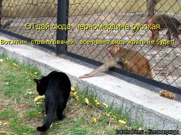 Котоматрица: ОТдай сюда, черномордина русская.... Вот,млин, страна рвачей...все-равно видь жрать не будет!