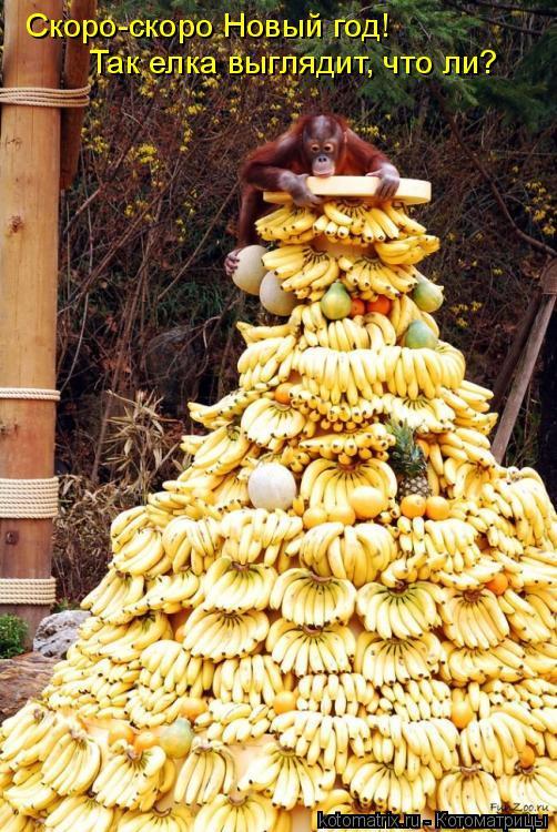 Котоматрица: Скоро-скоро Новый год! Так елка выглядит, что ли?