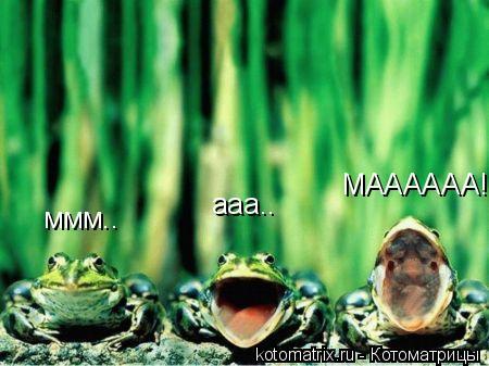 Котоматрица: ммм.. ааа.. МАААААА!