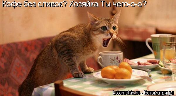 Котоматрица: Кофе без сливок? Хозяйка Ты чего-о-о?