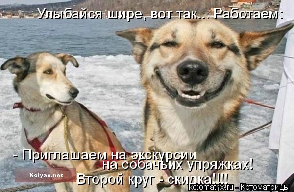 Котоматрица: Улыбайся шире, вот так... Работаем: - Приглашаем на экскурсии  на собачьих упряжках! Второй круг - скидка!!!!
