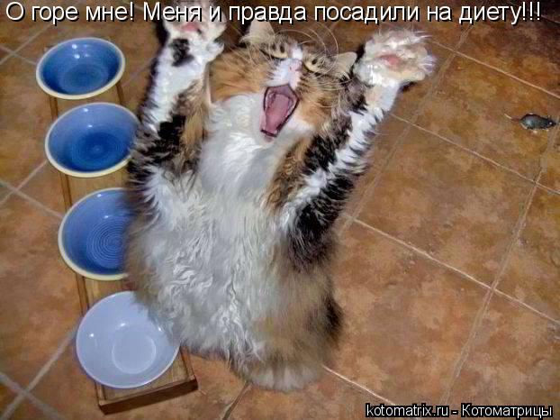 Котоматрица: О горе мне! Меня и правда посадили на диету!!!