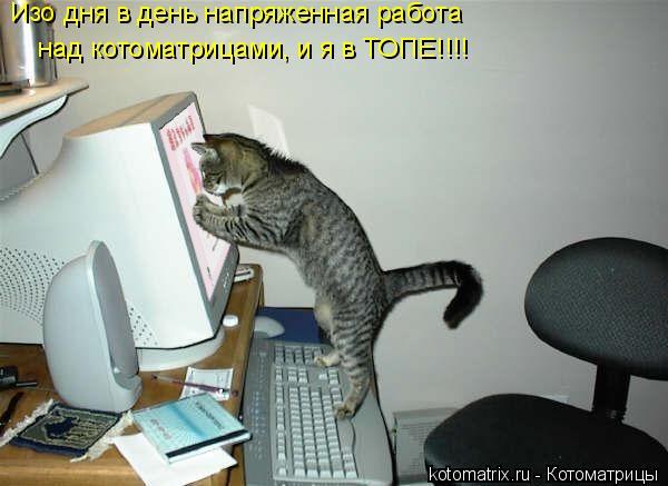 Котоматрица: Изо дня в день напряженная работа  над котоматрицами, и я в ТОПЕ!!!!