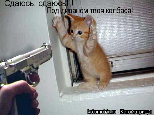 Котоматрица: Сдаюсь, сдаюсь!!! Под диваном твоя колбаса!