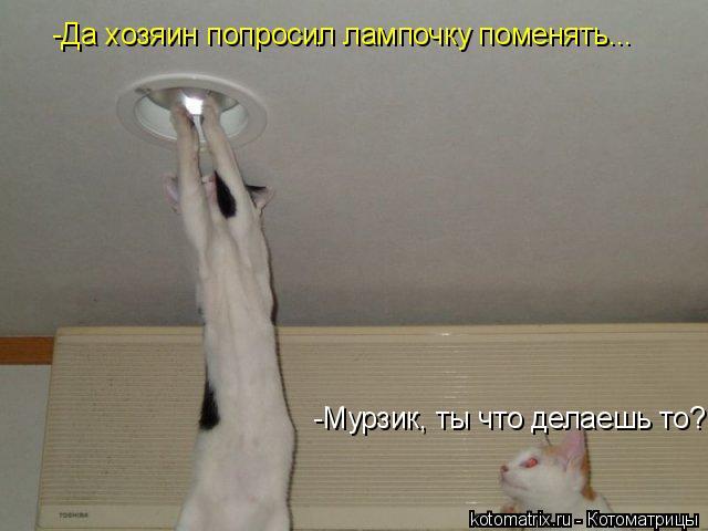 Котоматрица: -Мурзик, ты что делаешь то? -Да хозяин попросил лампочку поменять...
