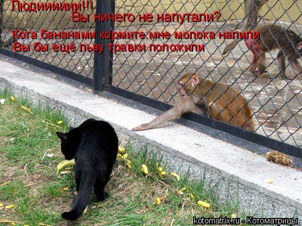 Котоматрица: Людииииии!!! Вы ничего не напутали? Кота бананами кормите:мне молока налили Вы бы ещё льву травки положили