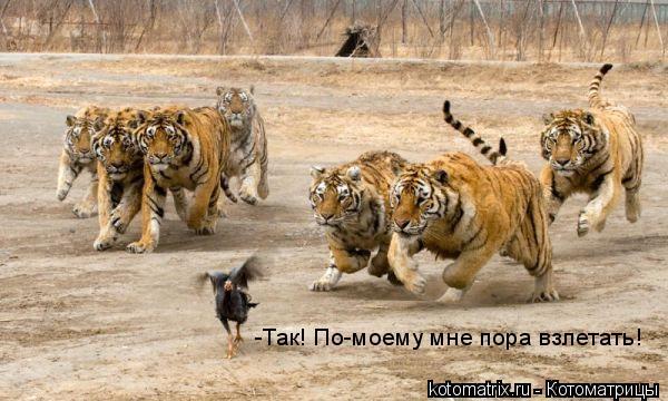 Котоматрица: -Так! По-моему мне пора взлетать!