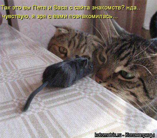 Котоматрица: Так это вы Петя и Вася с сайта знакомств? нда.. чувствую, я зря с вами познакомилась...