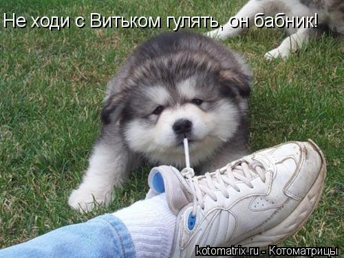 Котоматрица: Не ходи с Витьком гулять, он бабник!