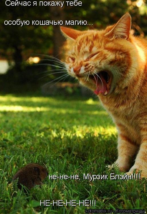 Котоматрица: Сейчас я покажу тебе особую кошачью магию... не-не-не, Мурзик Блэйн!!!! НЕ-НЕ-НЕ-НЕ!!!