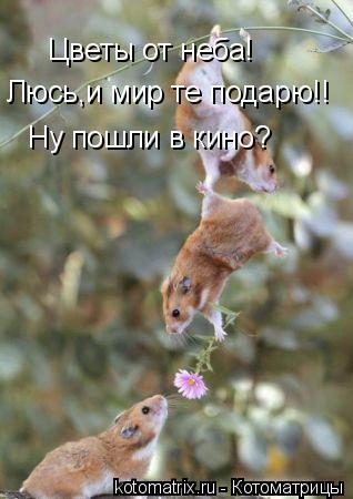 Котоматрица: Цветы от неба! Люсь,и мир те подарю!! Ну пошли в кино?