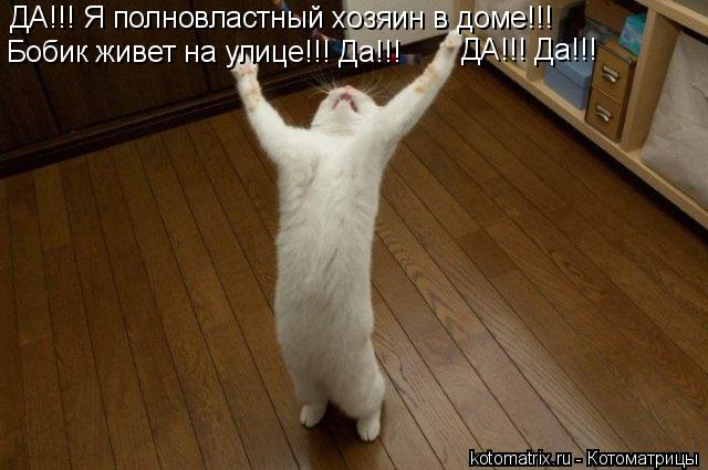 Котоматрица: ДА!!! Я полновластный хозяин в доме!!! Бобик живет на улице!!! Да!!! ДА!!! Да!!!