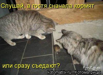 Котоматрица: Слушай, а гостя сначала кормят или сразу съедают?