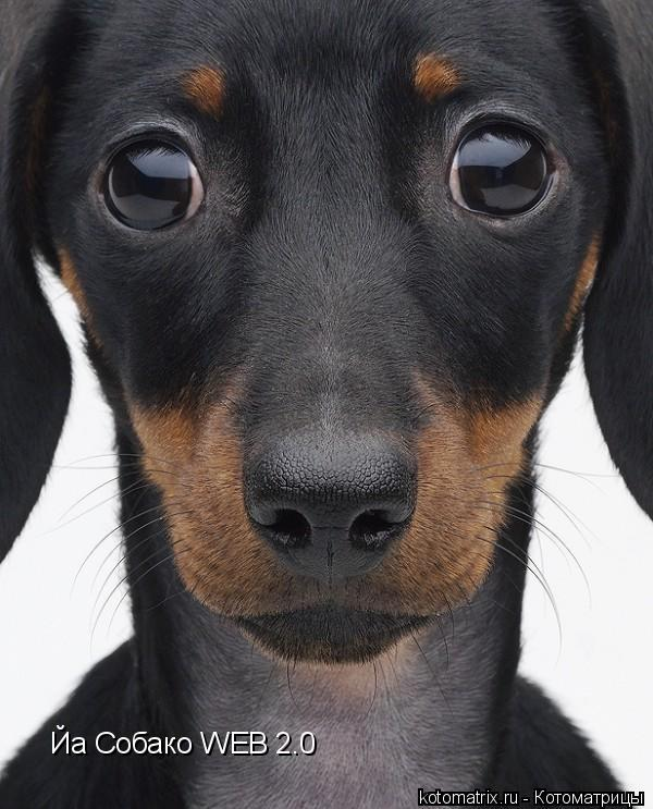 Котоматрица: Йа Собако WEB 2.0