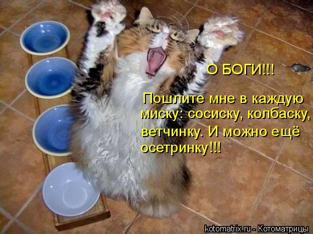 Котоматрица: Пошлите мне в каждую миску: сосиску, колбаску, ветчинку. И можно ещё осетринку!!! О БОГИ!!!