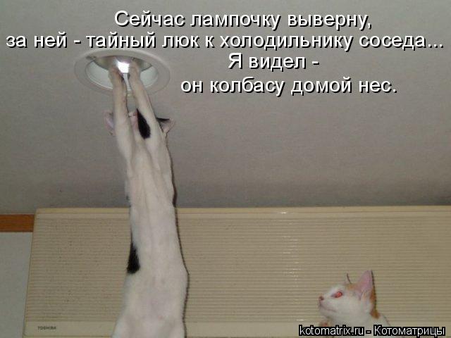 Котоматрица: Сейчас лампочку выверну, за ней - тайный люк к холодильнику соседа... Я видел -  он колбасу домой нес.