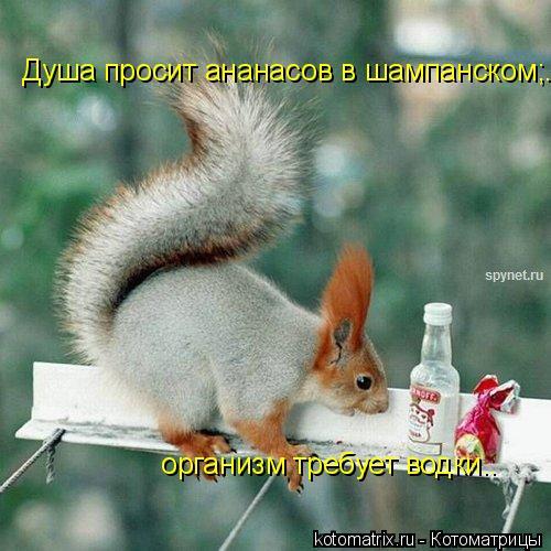 Котоматрица: Душа просит ананасов в шампанском;.  организм требует водки..