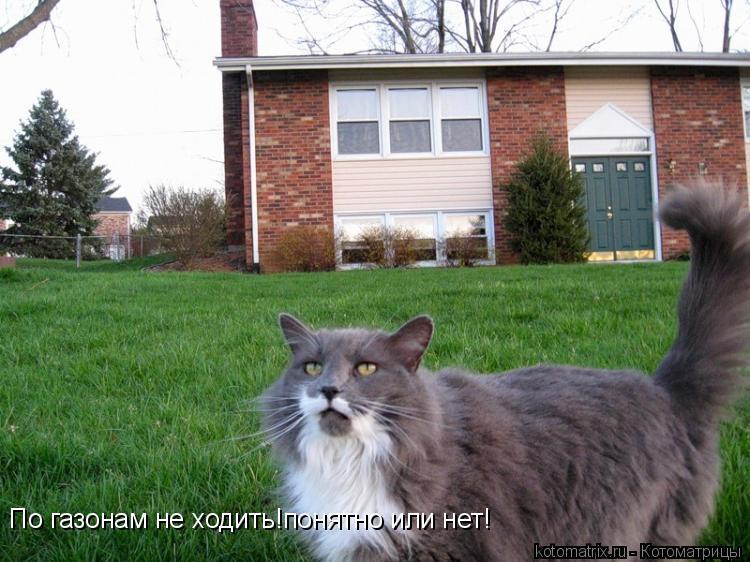 Котоматрица: По газонам не ходить!понятно или нет!